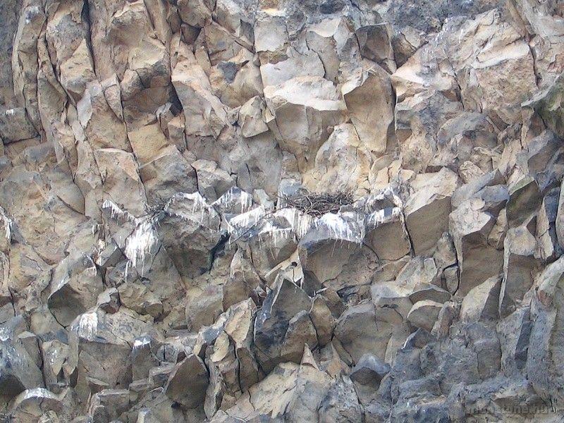 madárfészkek a majdnem függőleges falon