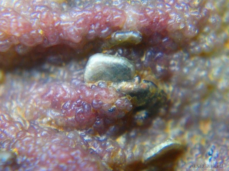 A belső kalcedon egyéb ásványokat (talán tridimitet) is fed