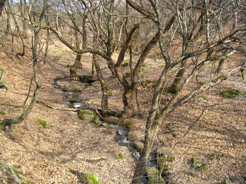 patak Komlóskán
